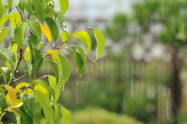 梅雨の時期の自律神経の乱れ。